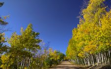 Free Scenic Drive Through Aspens Royalty Free Stock Images - 14492069