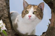 Free Cat On A Tree Stock Photography - 14492102