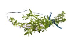 Free Branch Of  Fresh Blooming Thyme, Isolated Royalty Free Stock Photos - 14492618