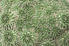 Free Cactus Background Stock Photos - 14493843