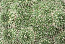 Free Cactus Background Stock Photos - 14493843
