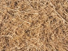 Free Bed Of Straw Used For Mulch Stock Photography - 14495202