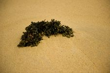 Free Sea Weed Stock Image - 14495461