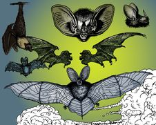 Bats And Flying Dog. Stock Photos