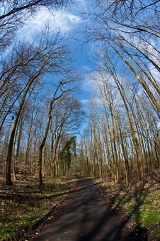 Path Thru Wood And Spring Tree Crowns Stock Image