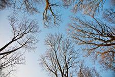 Spring Tree Crowns On Deep Blue Sky
