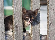 Homeless Kitten Stock Image