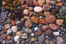 Tide Pool Beach Pebbles Royalty Free Stock Images