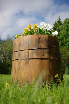 Free Wooden Barrel With Viola Flowers In Garden Royalty Free Stock Photography - 14497377