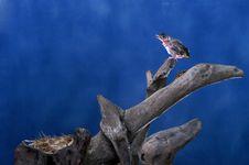 Free Bird Blue Background Stock Photo - 14498250