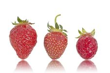 Free Three Strawberries Royalty Free Stock Photography - 14498607