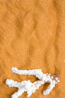 Coral On Sand Royalty Free Stock Images