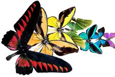 Rainbow From Butterfly Royalty Free Stock Photos