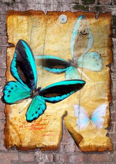 Free Butterflies On Old Vellum Royalty Free Stock Photography - 14499347