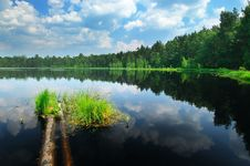 Free Lake In The Forest Royalty Free Stock Photo - 14499975