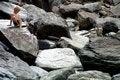 Free Boy On The Rocks Stock Photo - 1454250