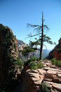 Free Tree On Mountain At Zion Canyon Stock Images - 1456044