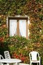 Free Flowers Wall Near The Sea Stock Image - 1456201
