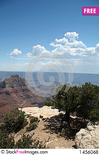 Grand Canyon Overlook with Tree Stock Photo