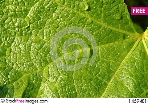 Free Leaf & Drops Stock Image - 1459481