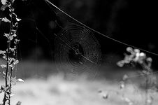 Free Photo Spider S Snare Stock Images - 1450894
