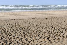 Free On The Beach Stock Images - 1451094