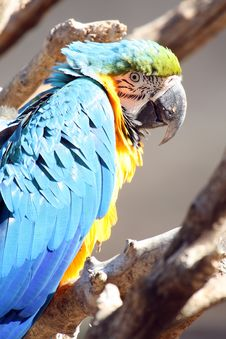 Free Surprised Parrot Royalty Free Stock Photography - 1451397