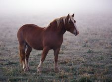 Free Horse Emerging From The Fog Stock Photo - 1452340