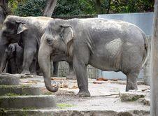 Free Elephant 1 Stock Photo - 1453230