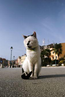 Free Cat Stock Image - 1454101