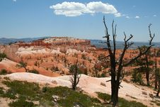Free Bryce Overlook With Dried Tree Royalty Free Stock Photos - 1454678