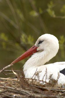 Free Stork In Nest Stock Image - 1454891