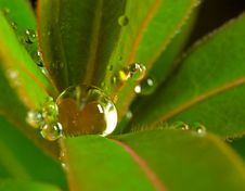 Free A Water Rop On A Leaf Stock Photo - 1455260