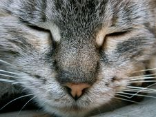 Free Face Of Cat Stock Photography - 1455492