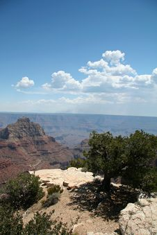 Free Grand Canyon Overlook With Tree Royalty Free Stock Photos - 1456068