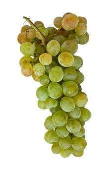 Free Grapes Royalty Free Stock Images - 1456129
