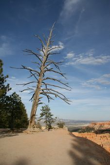 Free Bryce Canyon Royalty Free Stock Image - 1456796