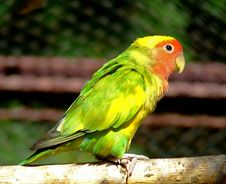 Free Parrot Royalty Free Stock Images - 1457149
