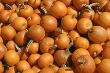 Baby Pumpkins Stock Photography