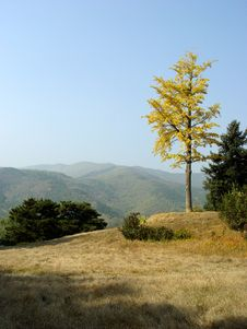 Free Autumn Scenery Royalty Free Stock Photography - 1457357