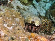 Free Hermit Crab Stock Image - 1458151