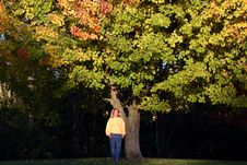 Woman Under Fall Tree Stock Photos