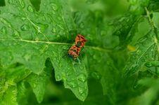 Leaf & Drops Stock Photos