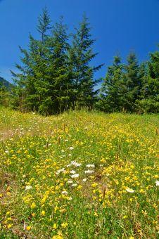 Free Mountain Meadow Stock Image - 1459781
