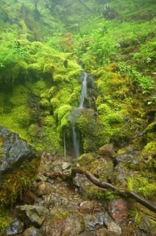 Free Waterfall And Columbines Royalty Free Stock Photos - 1459788