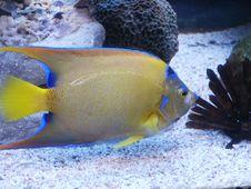 Free Fish Stock Photo - 1459820
