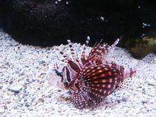 Free Fish Stock Photos - 1459833