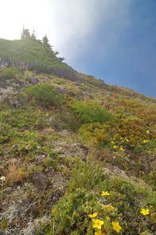 Free Mountain Meadow Stock Images - 1459874