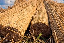 Reed Stacks Stock Photography