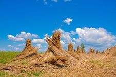 Reed Stacks Royalty Free Stock Photography